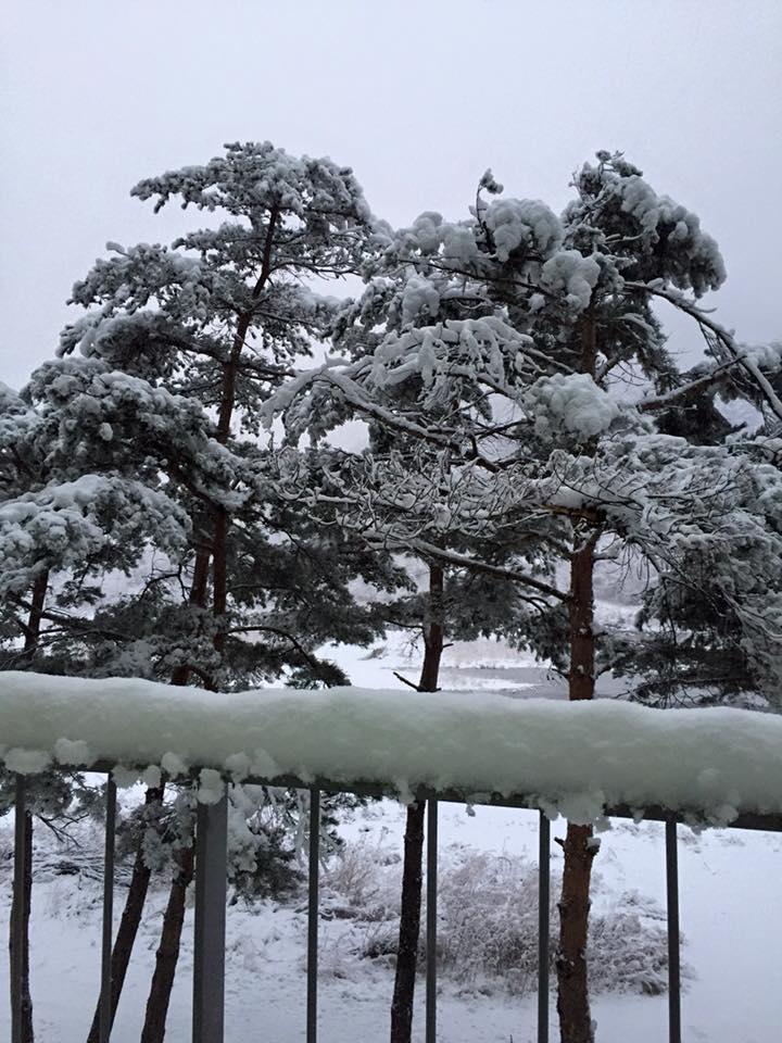 소나무14.jpg